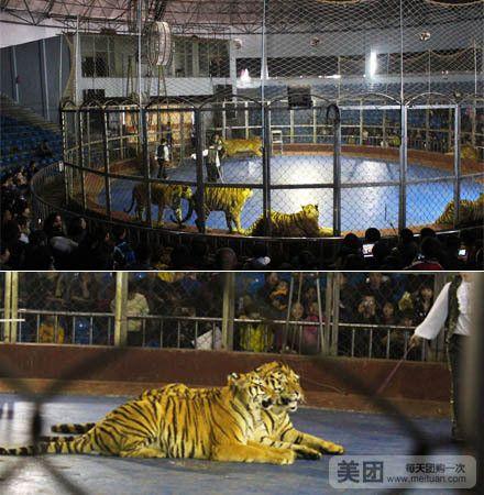 【北京秦岭野生动物园团购】秦岭野生动物园女士套餐